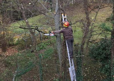 Elagage de tout arbre