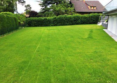 Pelouse Tonte de pelouse