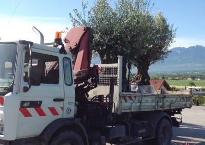 Plantations Transport d'arbres