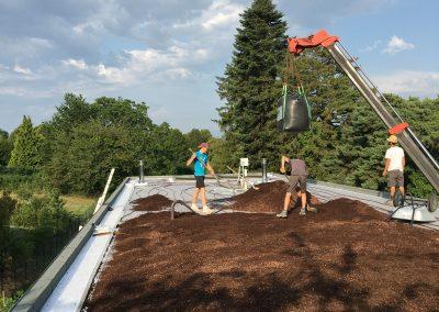 Création de la toiture végétalisée